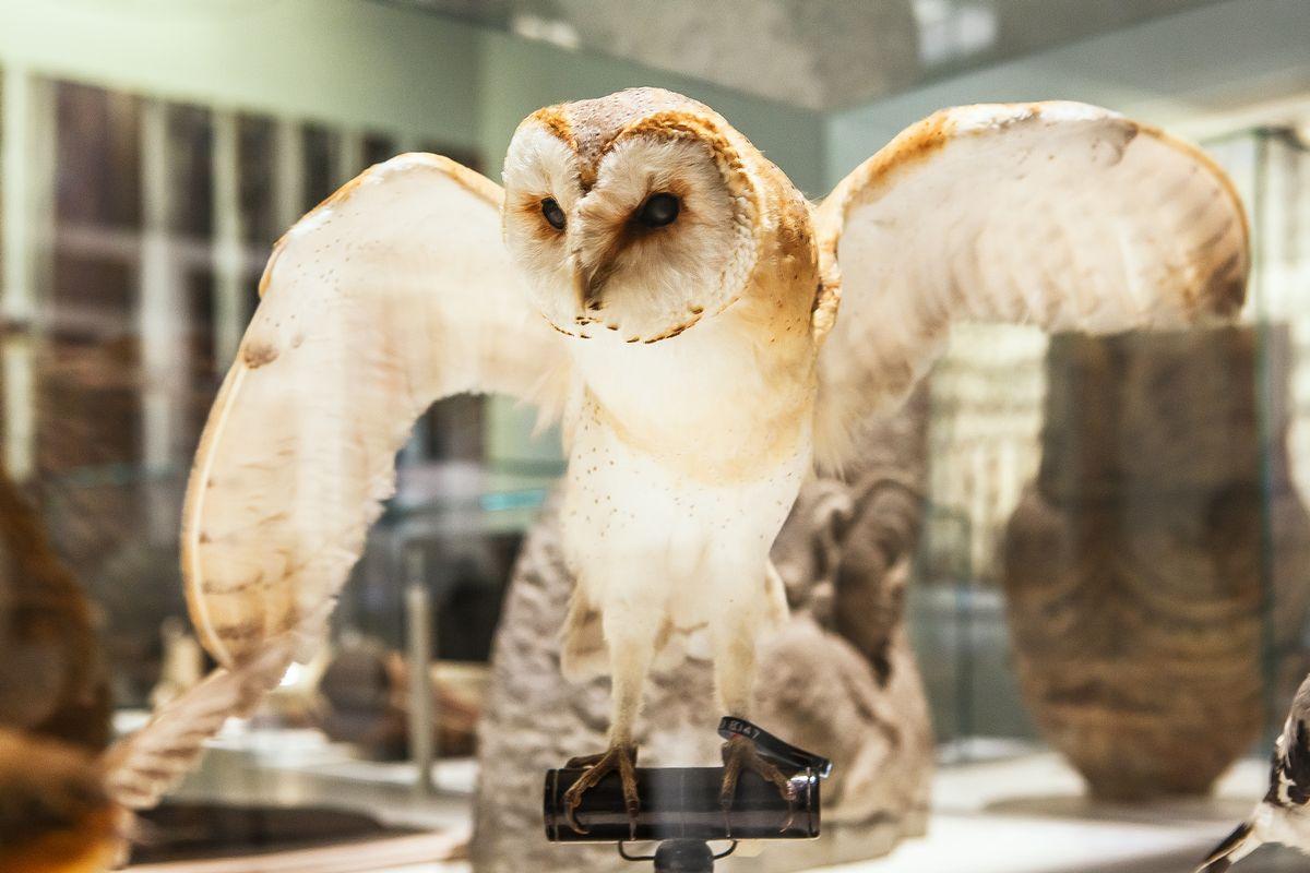 Connaissez-vous vraiment le  Musée des Confluences et ses collections ? X9xjh